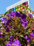 iPod Flowers