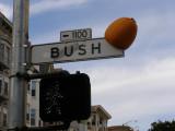 Bush Street Pumpkin