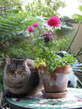Rocky and Ranunculus