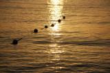 Negril Beach Sunset