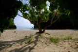 Frenchman's Cove Beach