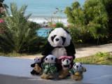 The Pandafords at the Treasure Beach Hotel