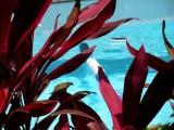 Hibiscus Lodge Pool
