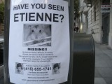 Have you seen Etienne?