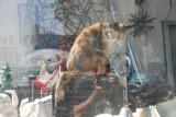 Valencia Street Kitty