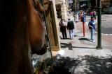 Chinatown Horse