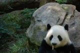 Panda Lunch