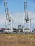 Big Oakland Cranes