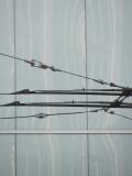 Muni Wires