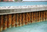 Nassau Pier with Birds