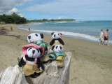 The Pandafords at Playa Dorada