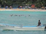 Sosúa Bay Snorkeling