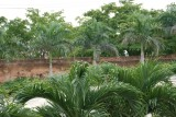 Calle de las Damas Palms
