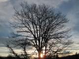 jim's sunrise tree