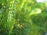 Grand Mayan Riviera Maya Ferns