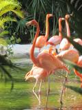 Grand Mayan Riviera Maya Flamingos