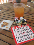 The Pandafords Playing Bingo