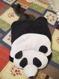 Rocky and Mr. Panda