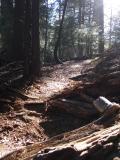 Trail to Carlon Falls