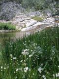 Hetch Hetchy Meadow