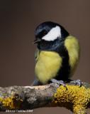 european_birds