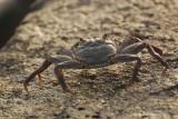 Crab-003.JPG