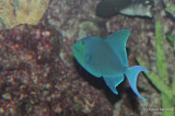 Fish_005.jpg