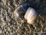 Sea_shells.jpg
