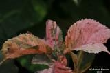 Leaves-07.jpg