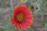 Flower_101.jpg