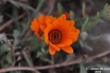 Flower_103.jpg