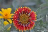 Flower_104.jpg