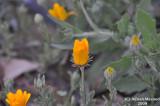 Flower_105.jpg