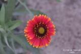 Flower_107.jpg
