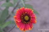 Flower_108.jpg