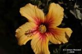 Flower_110.jpg