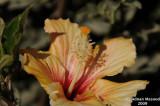 Flower_111.jpg