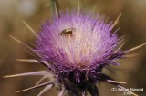 Flower_115.jpg