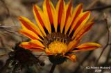 Flower_117.jpg