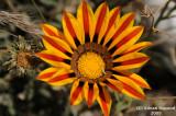 Flower_118.jpg