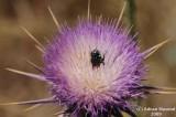 Flower_120.jpg