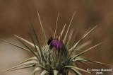 Flower_bud_116.jpg