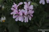 Flower_tiny_112.jpg