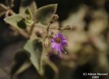 Flower_tiny_119.jpg