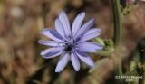 Flower_tiny_121.jpg