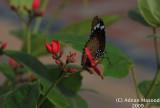 Butterfly_102.jpg