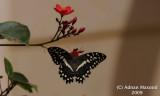 Butterfly_104.jpg
