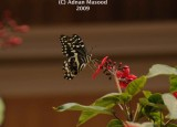 Butterfly_106.jpg