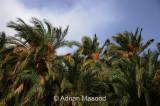 Al_Baha_100715.jpg