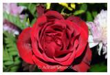 Flower_0111.jpg
